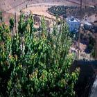 042, GAZA, STATE OF PALESTINE, Photographic Still of Live Streaming Webcam