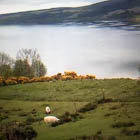 064, LOCH NESS, SCOTLAND, Photographic Still of Live Streaming Webcam