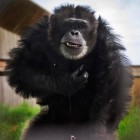 gaialight-save-the-chimps-015