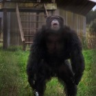 gaialight-save-the-chimps-024