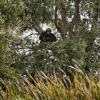 gaialight-save-the-chimps-032