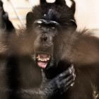gaialight-save-the-chimps-037