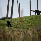 gaialight-save-the-chimps-040