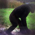 gaialight-save-the-chimps-041