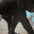 gaialight-save-the-chimps-049