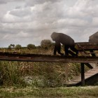 gaialight-save-the-chimps-053