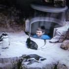 055_Pittsburgh_USA_pinguinsx